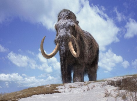 woolly-mammoth-1